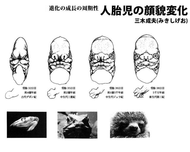 人胎児の顔貌変化(三木成夫)