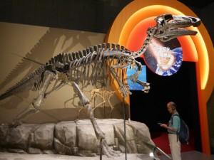 恐竜の展示ももちろんあります!