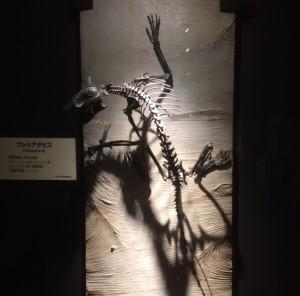 哺乳類界の負け組とも言える霊長類は樹冠に生きたことで、立体視など様々な特徴を進化させました。